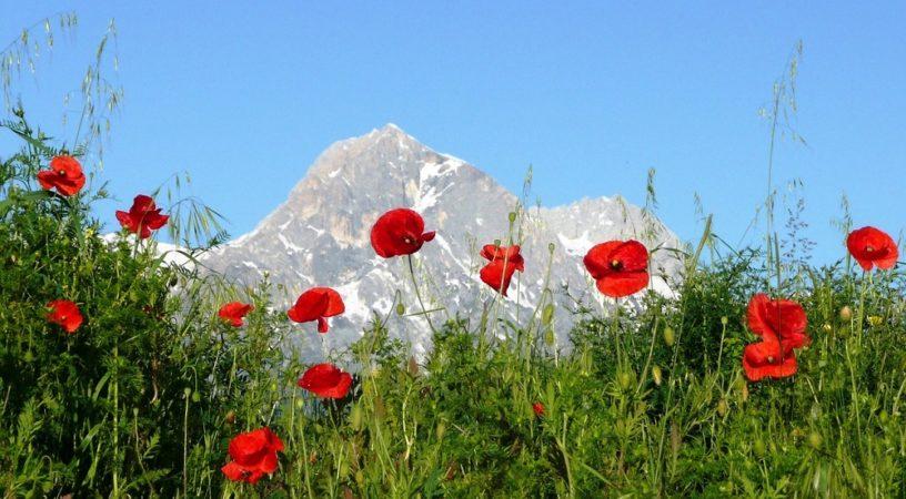 Abruzzo Appennines gelincikler italya