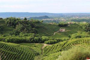 Treviso wine vineyard veneto Italy